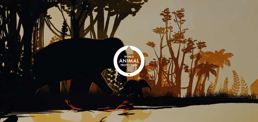 WORLD ANIMAL PROTECTION | BRAND STORYTELLING